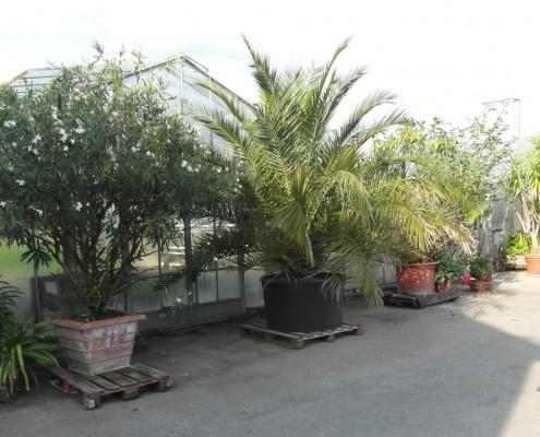 Palmenhaus aussen